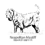 네아폴리탄 마스티프