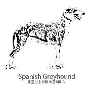 그레이하운드/스페니쉬 그레이하운드