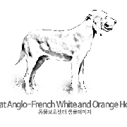 그레이트 앵글로-프랜치 화이트 앤드 오렌지 하운드