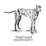 그레이하운드/잉글리시 그레이하운드