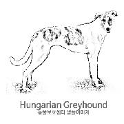 그레이하운드/헝가리언 그레이하운드