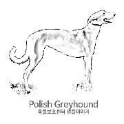 그레이하운드/폴리시 그레이하운드