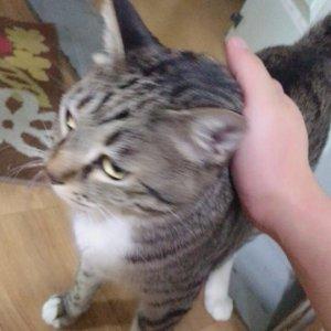 고양이를 찾습니다 기타묘종 경기도 의왕시