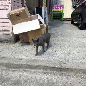 고양이 목격 러시안블루 충청남도 예산군