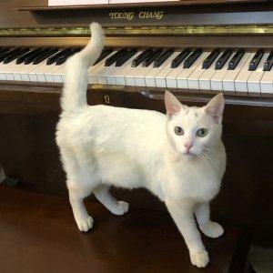 고양이 실종 터키시앙고라 제주특별자치도 제주시
