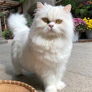 고양이를 찾습니다 페르시안 서울특별시 성동구