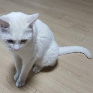 고양이 구조 터키시앙고라 제주특별자치도 서귀포시