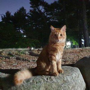 고양이 목격 믹스묘 경기도 수원시 권선구