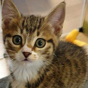 고양이 실종 기타묘종 충청남도 예산군