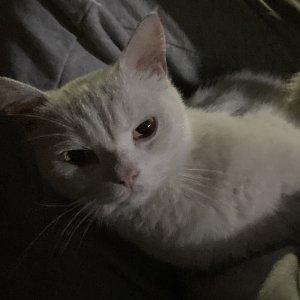 고양이 목격 기타묘종 제주특별자치도 제주시