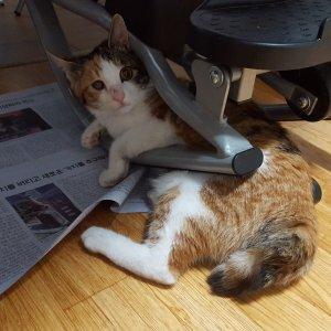 고양이를 찾습니다 기타묘종 전라남도 나주시