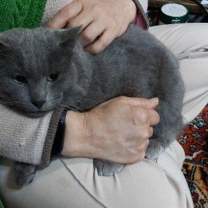 고양이 구조 러시안블루 제주특별자치도 제주시
