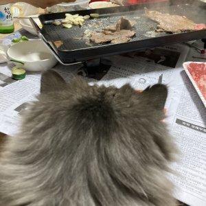 고양이 실종 페르시안 경기도 성남시 수정구