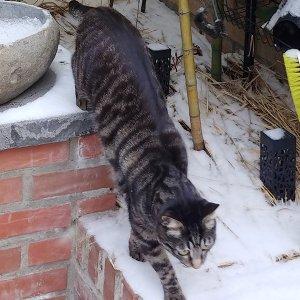 고양이를 찾습니다 코리아쇼트헤어 서울특별시 강북구