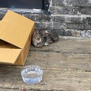 고양이 구조 기타묘종 경상남도 양산시