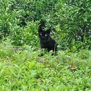 고양이 목격 기타묘종 제주특별자치도 서귀포시