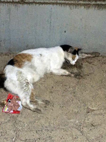 고양이를 찾습니다 고양이실종신고,보호,목격신고 : 동물보호센터