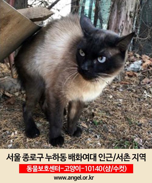 고양이 실종 샴 서울특별시 종로구