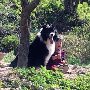 강아지를 찾습니다 보더콜리 전라북도 완주군