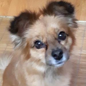 강아지를 찾습니다 믹스견 서울특별시 중랑구