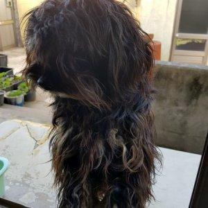 강아지를 찾습니다 믹스견 부산광역시 강서구