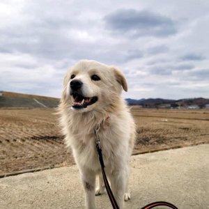 강아지를 찾습니다 믹스견 서울특별시 용산구