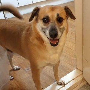 강아지를 찾습니다 믹스견 인천광역시 중구