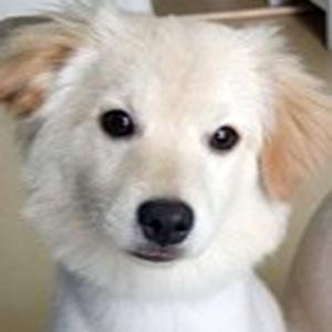 강아지 실종 기타견종 서울특별시 강서구