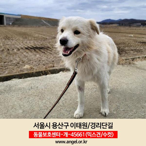 강아지 실종 믹스견 서울특별시 용산구