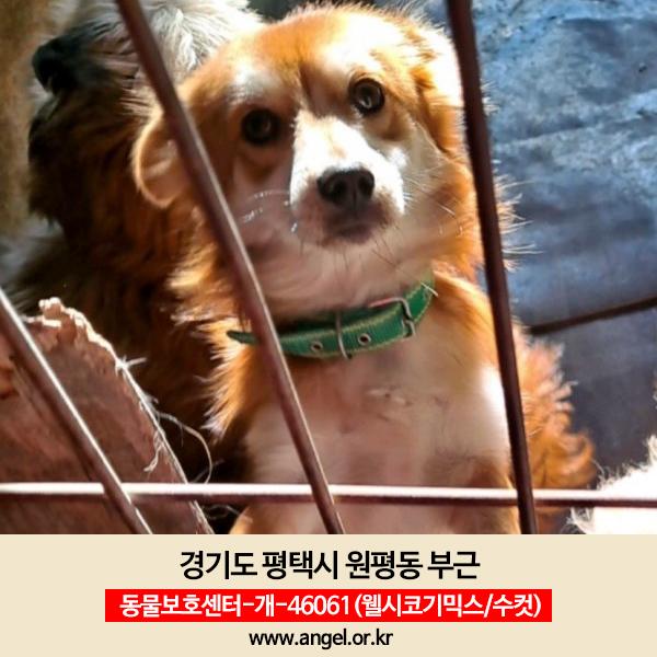 강아지 실종 믹스견 경기도 평택시