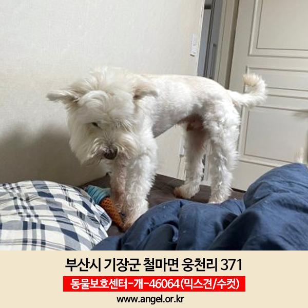 강아지 실종 믹스견 부산광역시 기장군