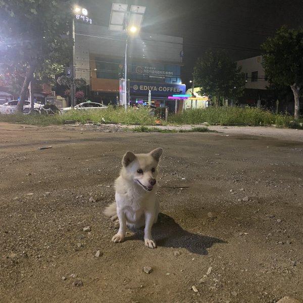 강아지를 찾습니다 강아지실종신고,보호,목격신고 : 동물보호센터
