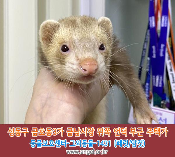 실종동물 페럿 서울특별시 성동구