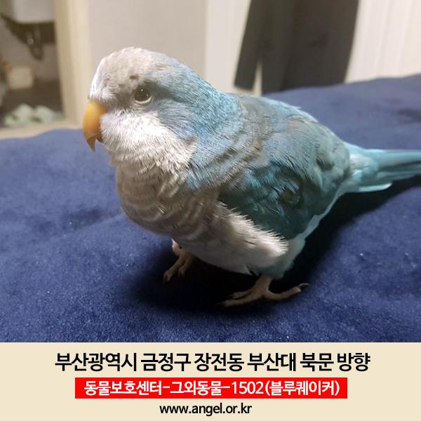 실종동물 앵무새 부산광역시 금정구